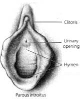la vagina aprieta el pene