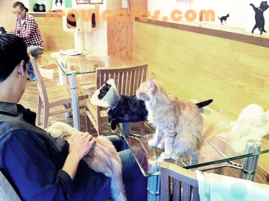 cat cafe korea