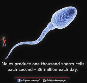 MALE INFERTILITY INCREASES WORLDWIDE