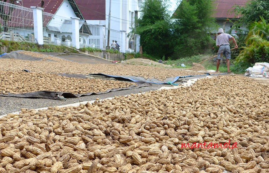 Kawangkoan - the peanut city