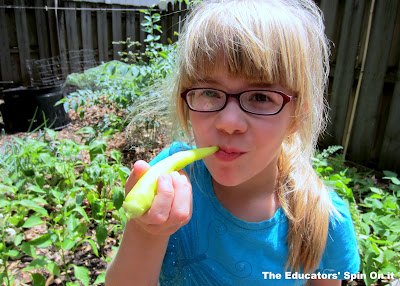 The outdoor garden: kids learn life skills by growing banana peppers and other vegetables.