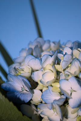Neutral Dwelling Floral Recipe