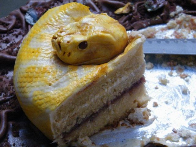 Python birthday cake, Creepy looking.