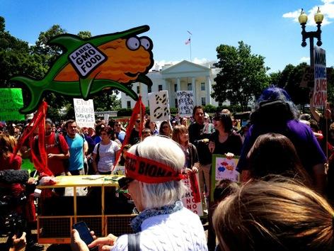 Marchas contra Monsanto por todo el mundo el 25 de Mayo 2013 Monsanto+EEUU+01