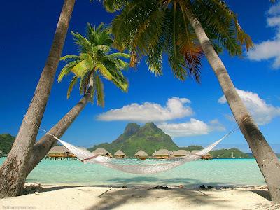 gambar pantai dan pohon kelapa