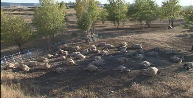 Rayo mata a 114 ovejas y 12 vacas en Bolivia