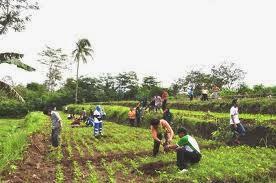 Peluang Kerja Untuk Jurusan Pertanian