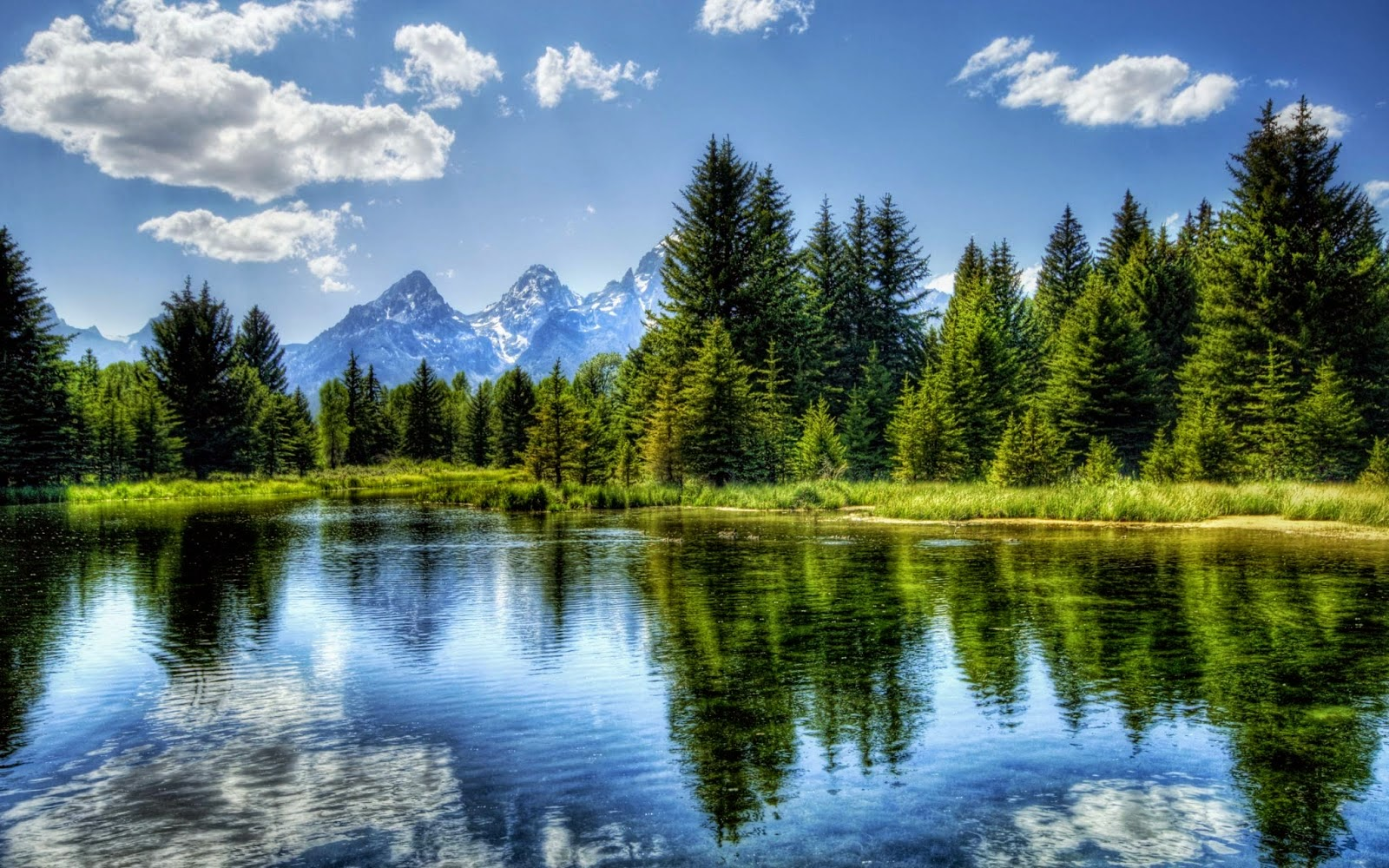 Gambar Pemandangan Alam Danau dan Hutan Indah