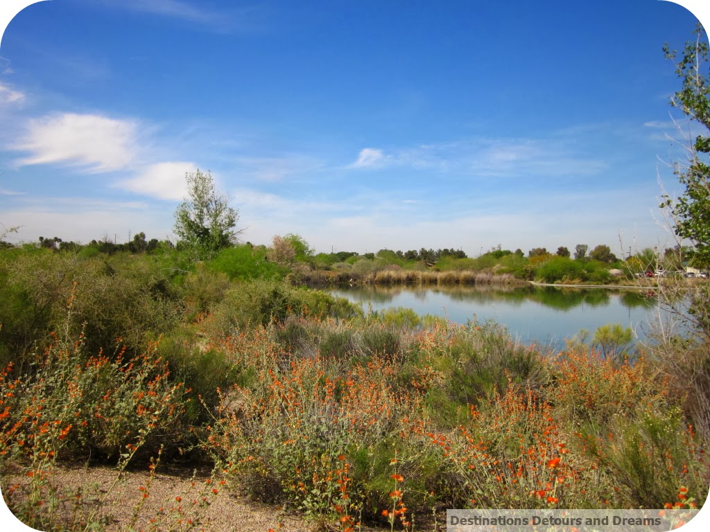 Gilbert Riparian Preserve at Water Ranch
