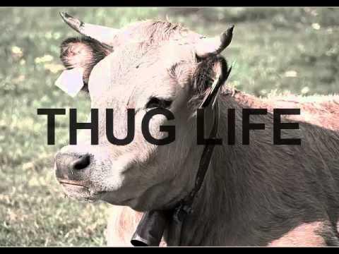 Thug Life Cow