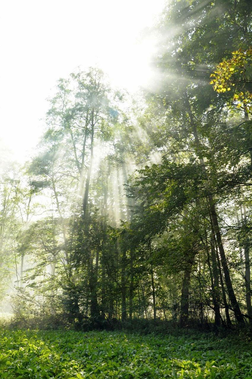 Dym, mgła i promienie słońca