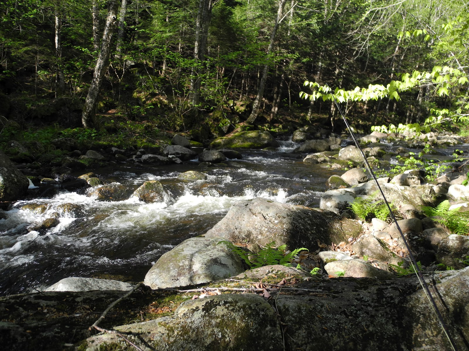 Fishing small streams back to small streams and brook trout for Fish and stream