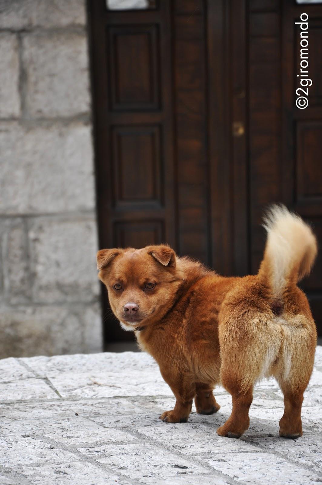 Cusano Mutri, Benevento