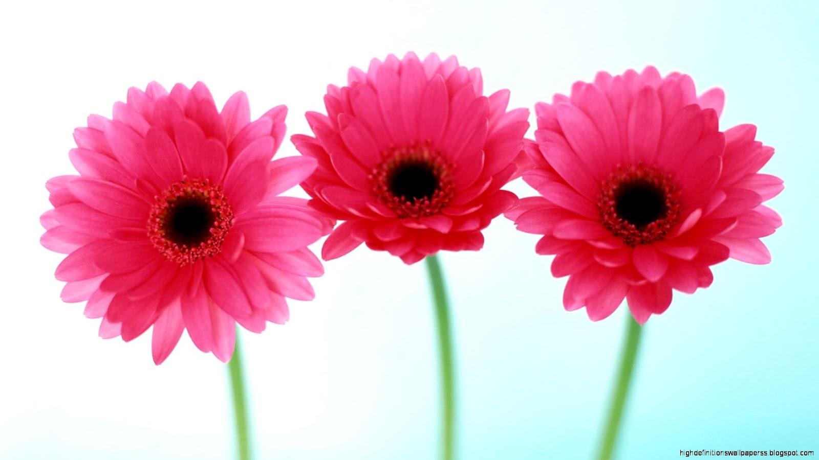 Pink Flower Round Hd Flower Wallpaper High Definitions Wallpapers