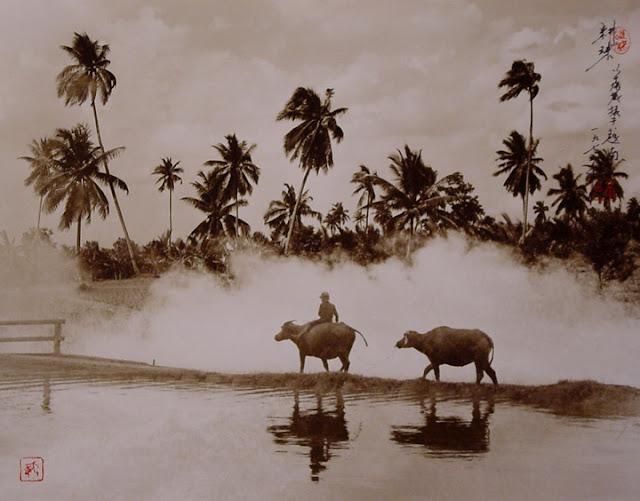 Fotografía de Don Hong Oai: campesino sobre bueyes