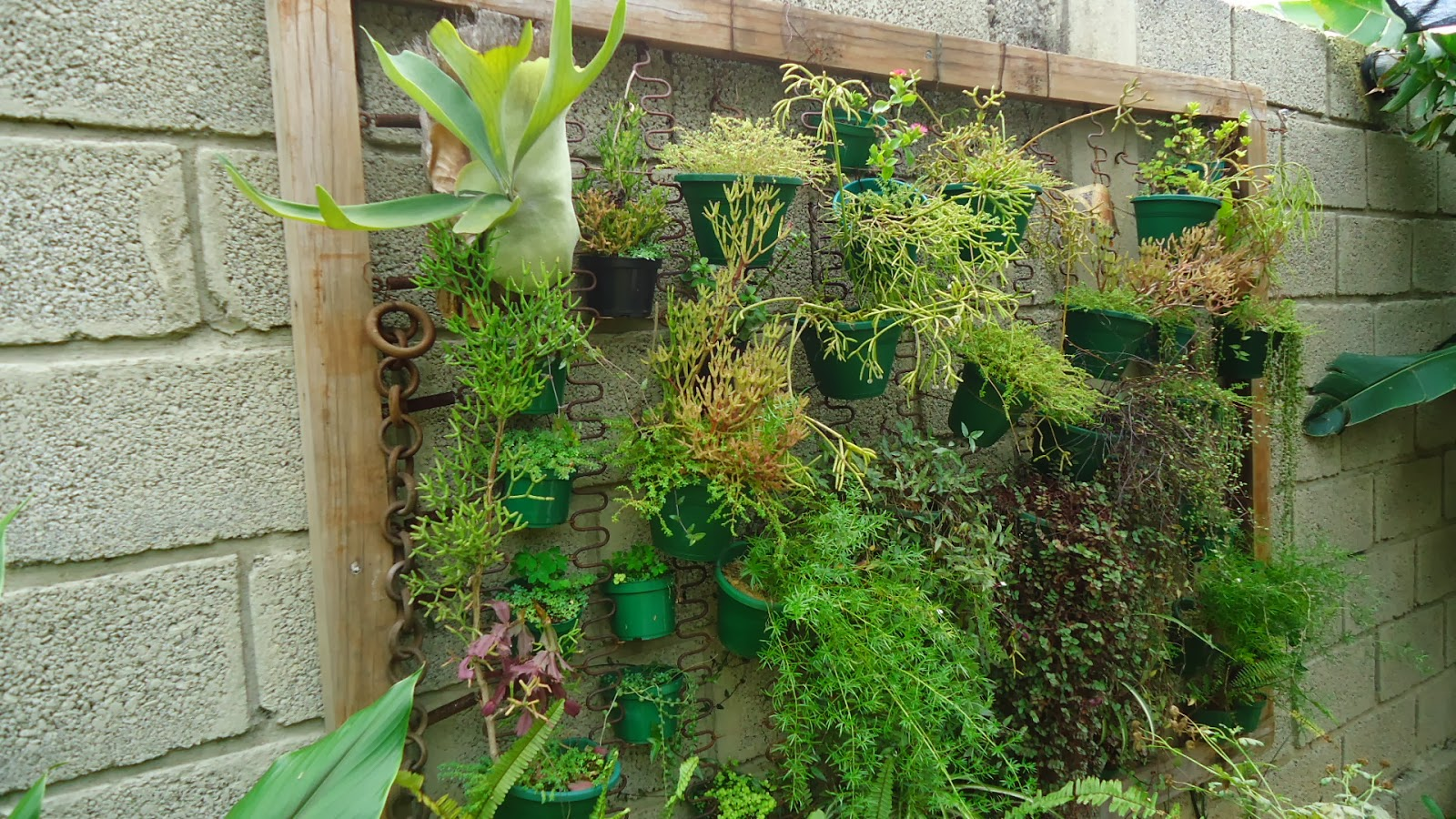 quintal jardim vertical:Cheiro de Quintal: JARDIM VERTICAL