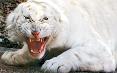 Horrible White Tiger