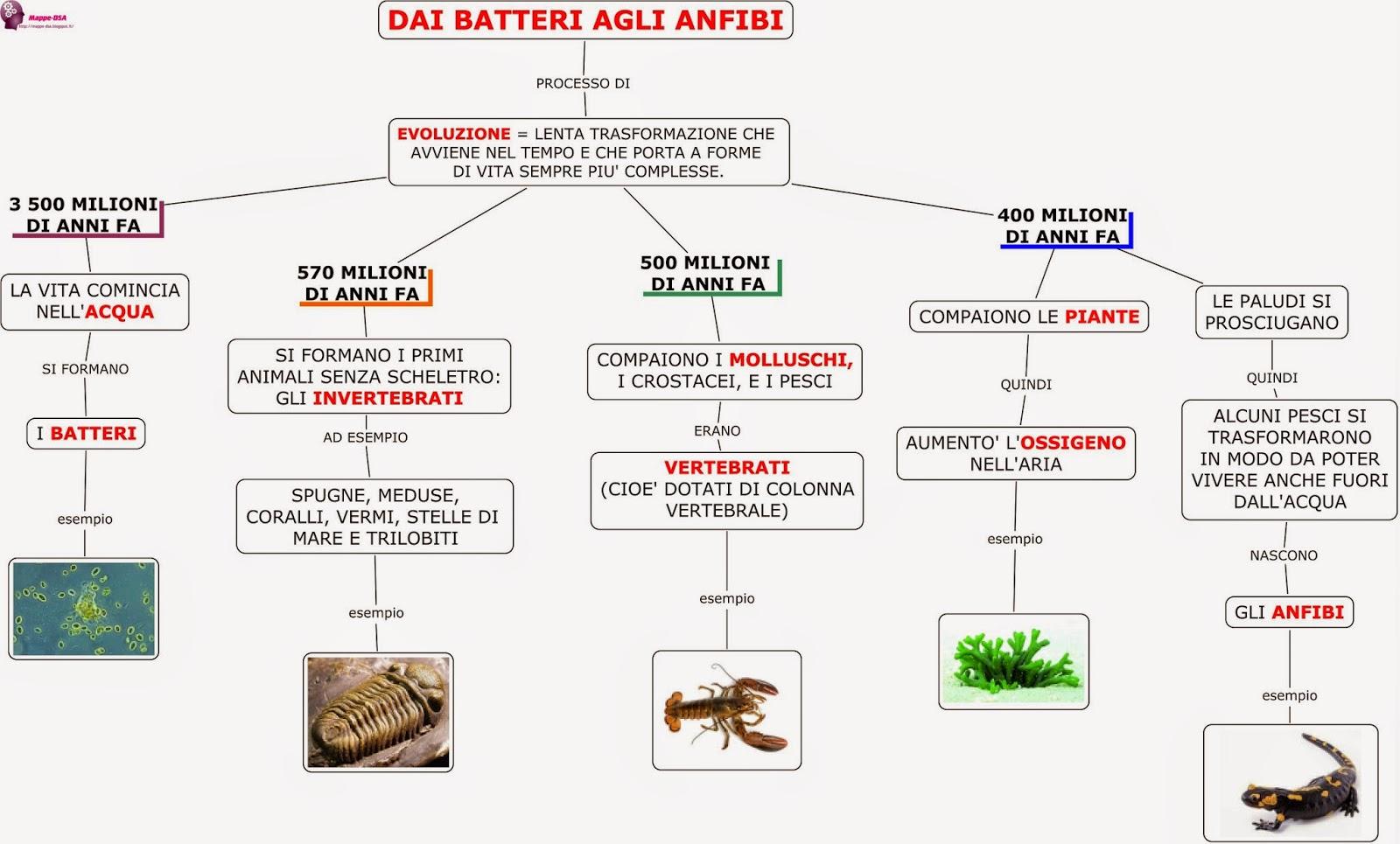 mappa dsa storia batteri anfibi preistoria