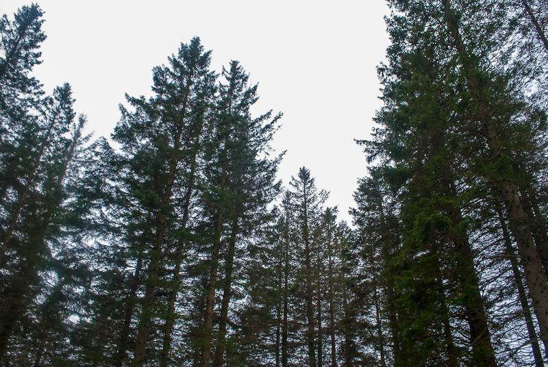 Trees and woods of mount floyen in bergen norway