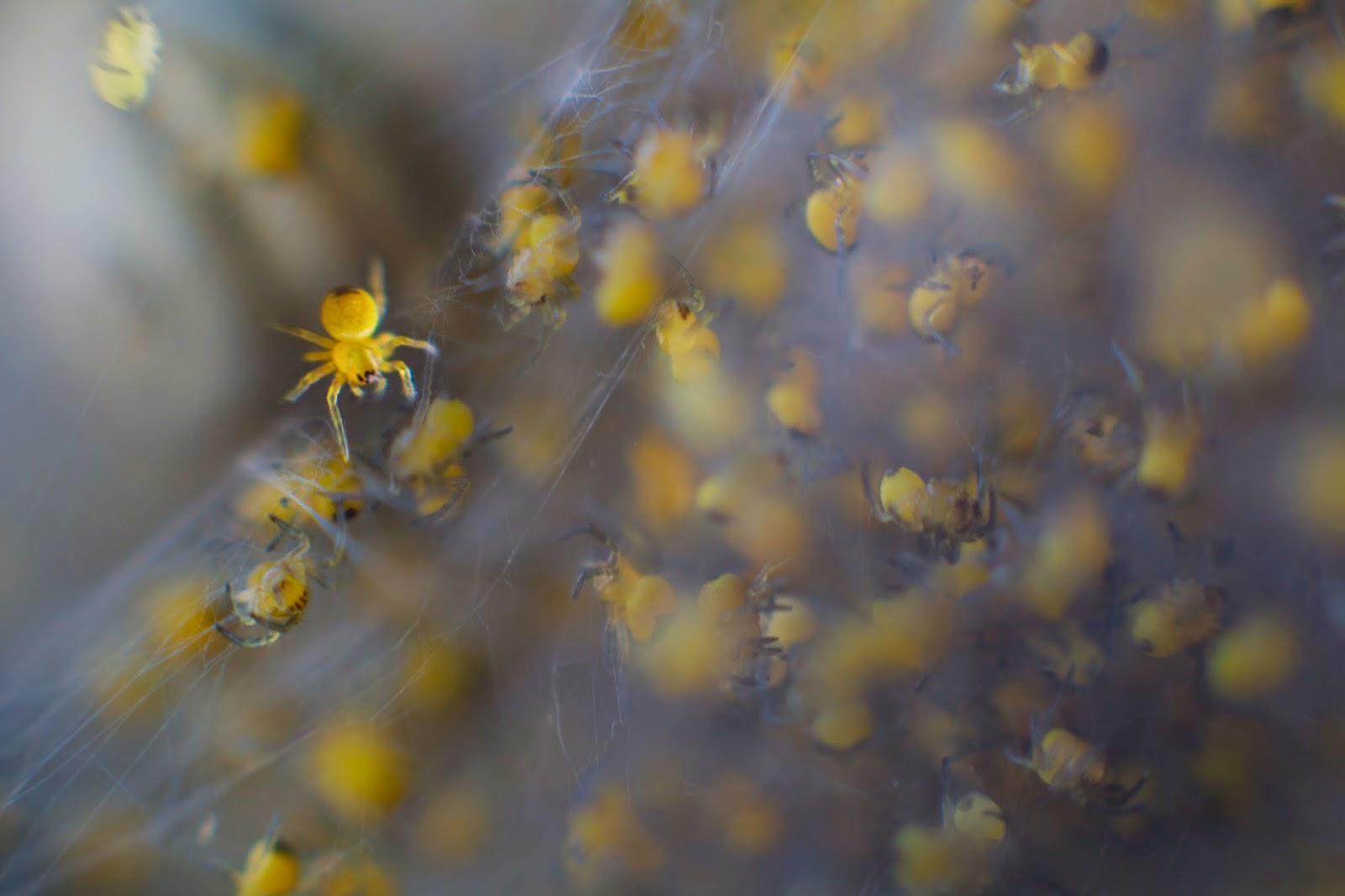 Detalle de un nido de arañas