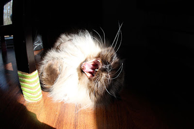 goma-sunbathing02