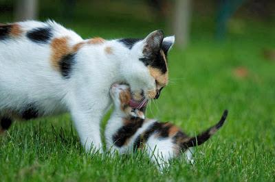 mamá gata con hijo gatito