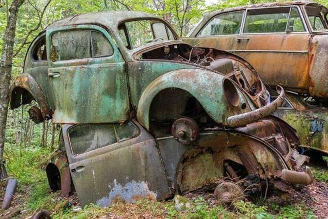 Sweden's classic car graveyard: 1,000 automobiles from a bygone era worth £100,000 found rusting in a forest
