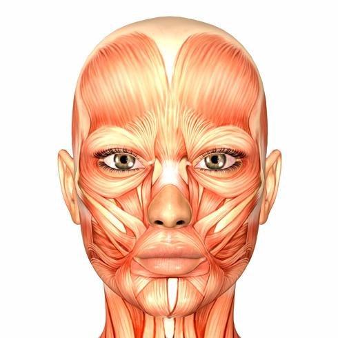 Libro de gimnasia facial. Ejercicios faciales.: CARACTERÍSTICAS DE ...