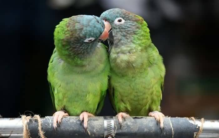 kissing videos: