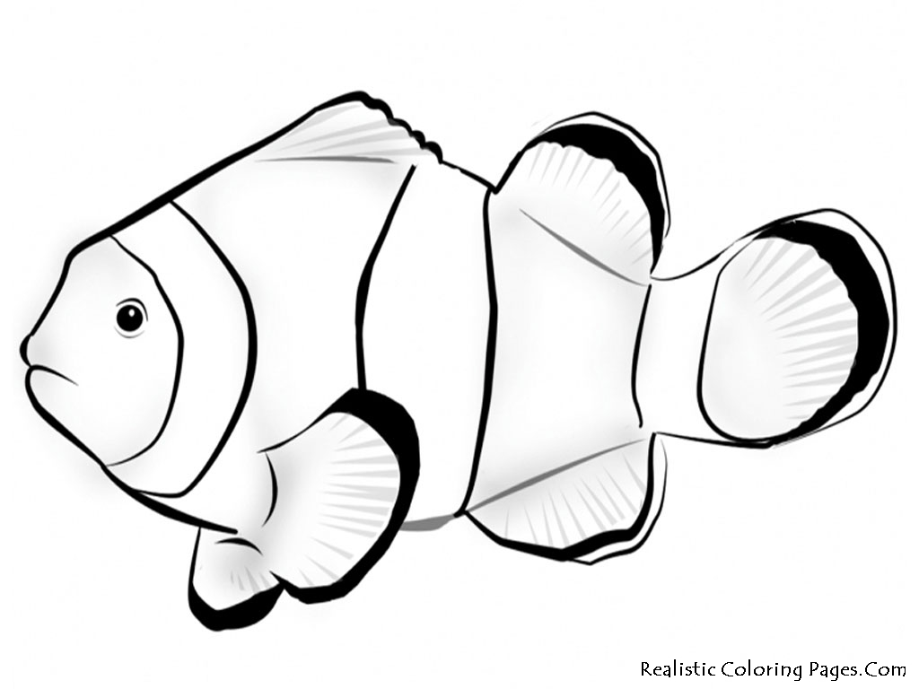 Nemo Fish Coloring Pages Realistic