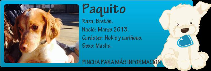 http://mirada-animal-toledo.blogspot.com.es/2014/01/paquito-bretoncito-peque-en-adocpcion.html