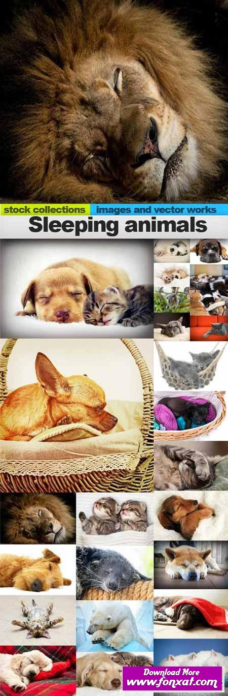 Sleeping animals,25 x UHQ JPEG صور حيوانات نائمة