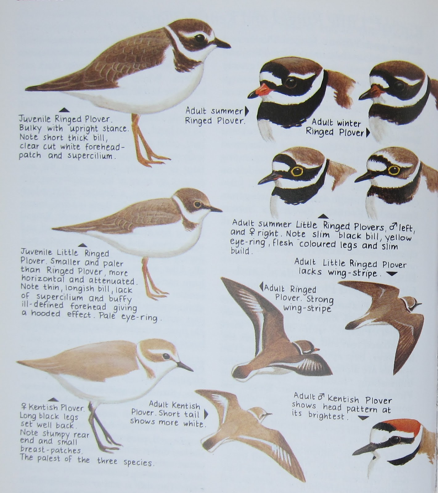 bird identification guide images reverse search