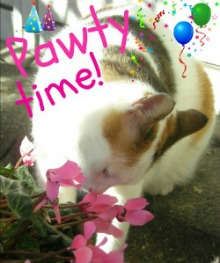 KITTY PARTY!!!!