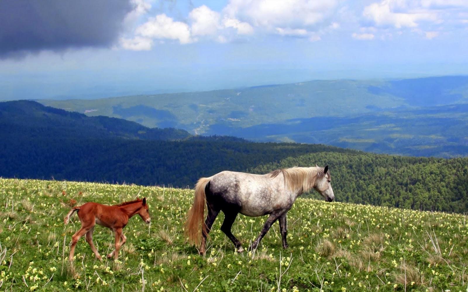 Imagen de bellos caballos en la naturaleza