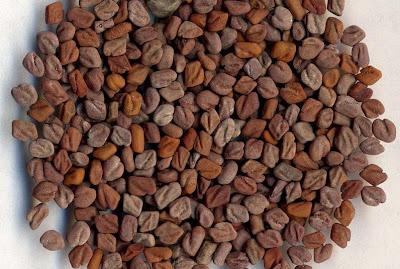 葫蘆巴籽 fenugreek seed