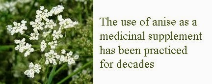 anise pimpinella anisum benefits