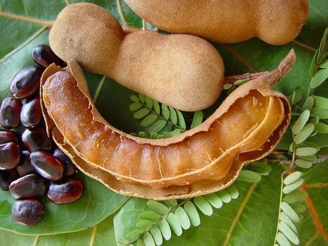 Fruit tamarin - photo#1