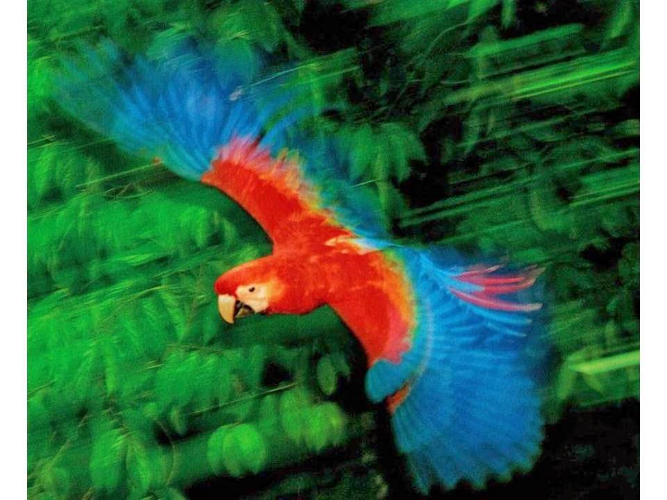 Especial: Apresentações da Amazônia