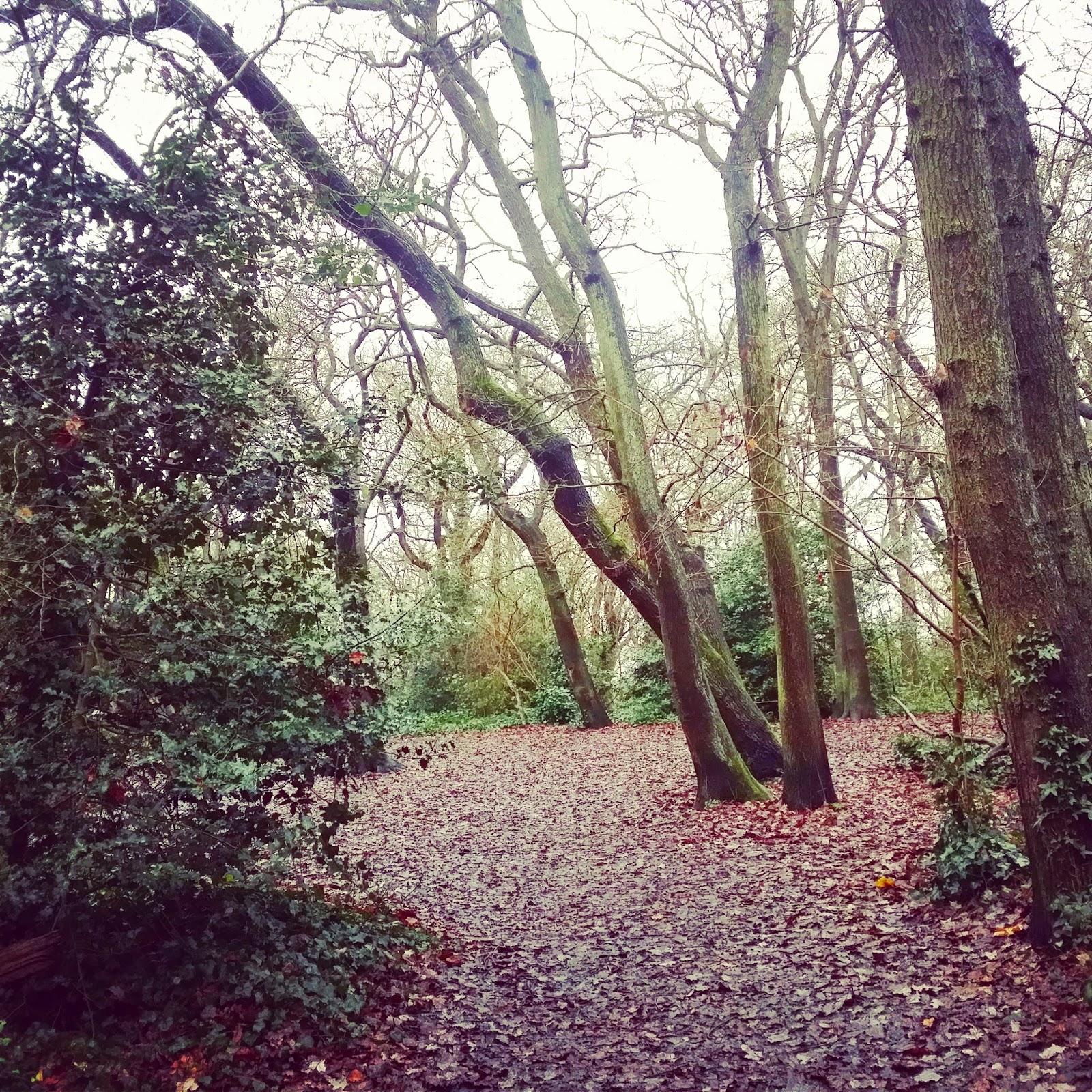 Dulwich Wood