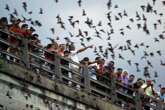 See Austin Com Congress Avenue Bats