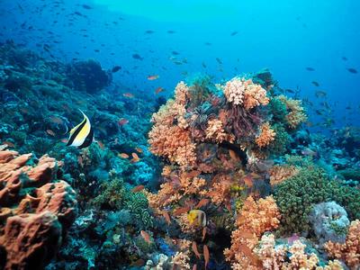 KLH Ajak Jurnalis Kampanye Keanekaragaman Hayati Kepulauan