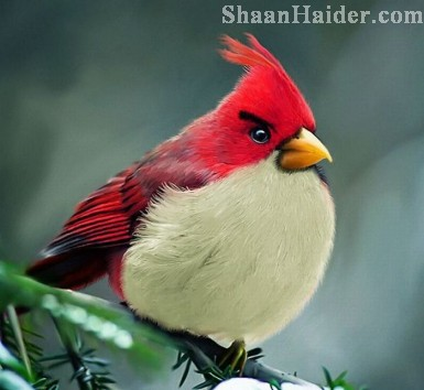 The Real Life  ANGRY BIRDS
