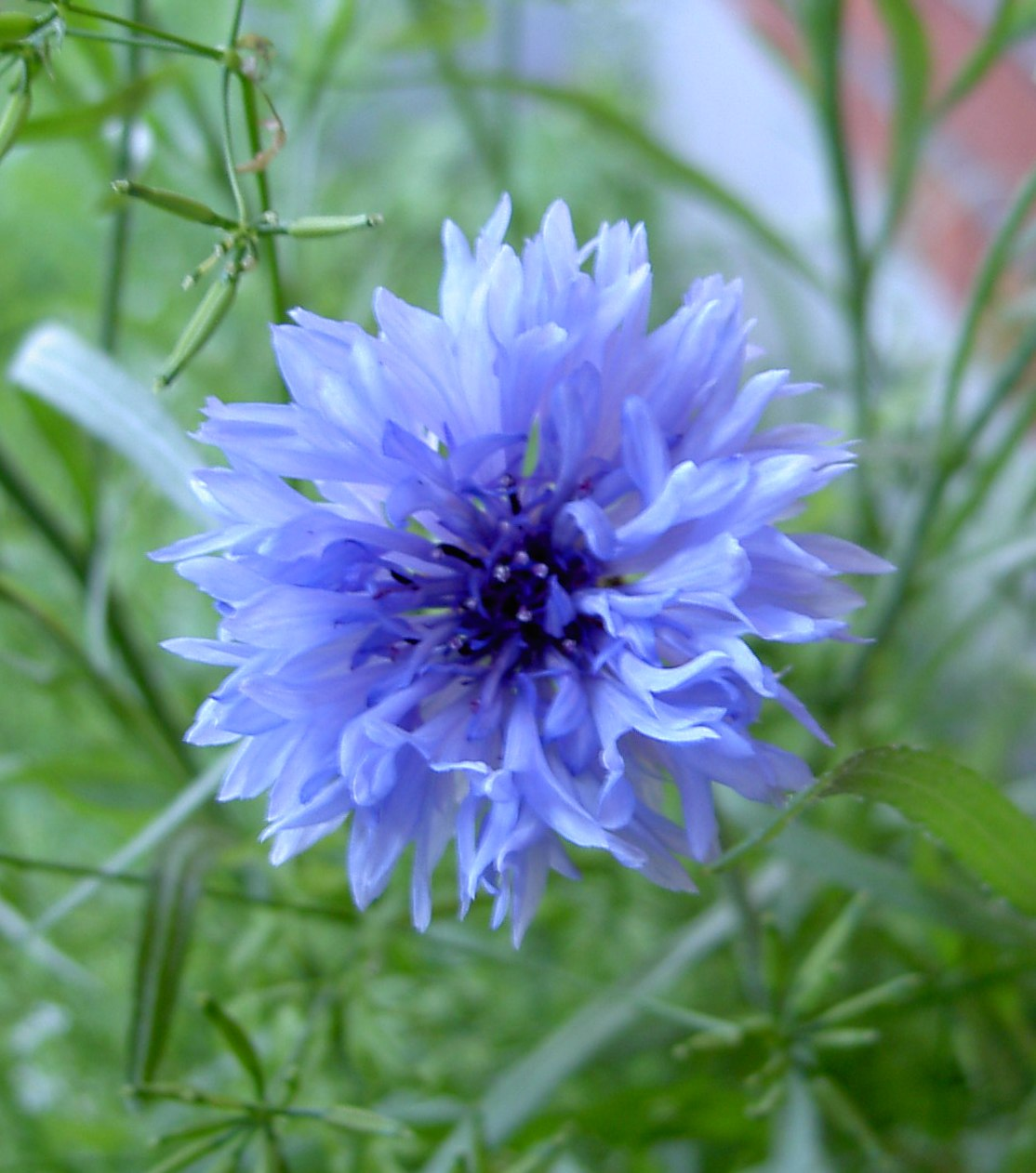 specielle blomster