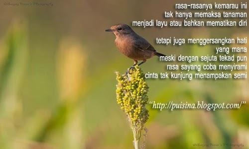 Puisi Cinta Gersang Kemarau Panjang
