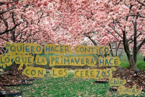 Quiero hacer contigo lo que la primavera hace con los cerezos - Pablo Neruda