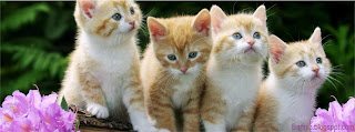 Foto Sampul kucing lucu