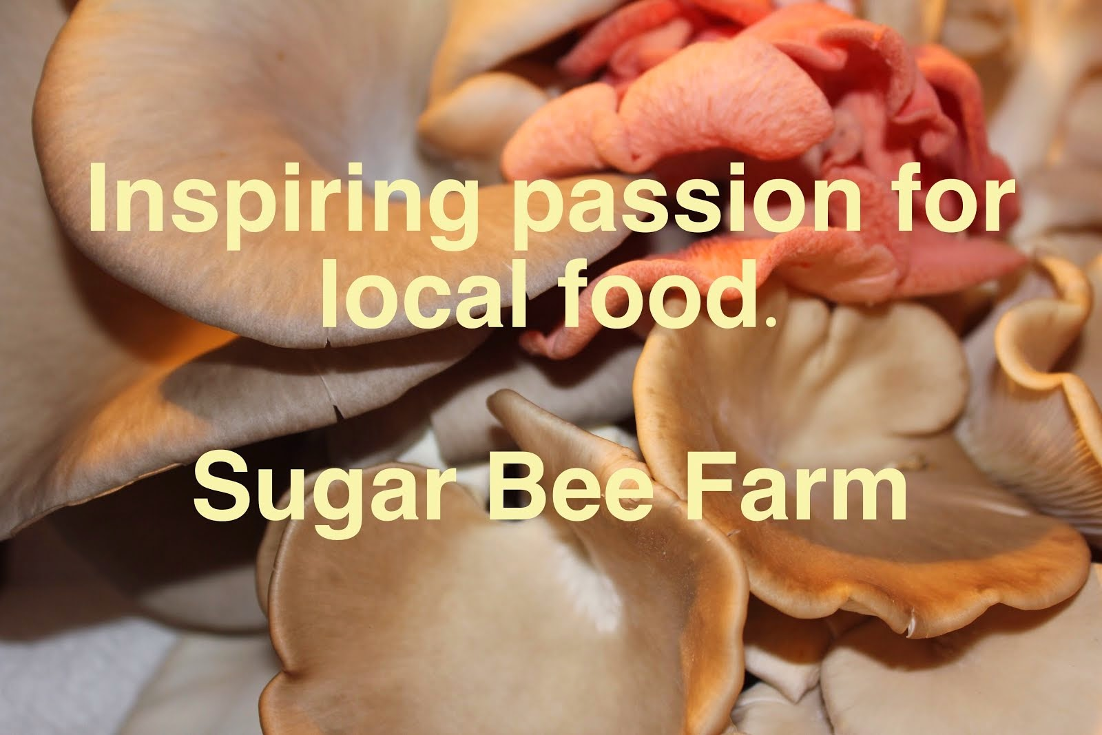 Sugar Bee Farm