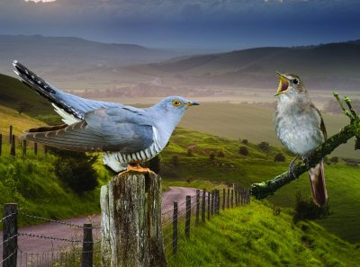 CUCKOO AND NIGHTINGALE APPEAL