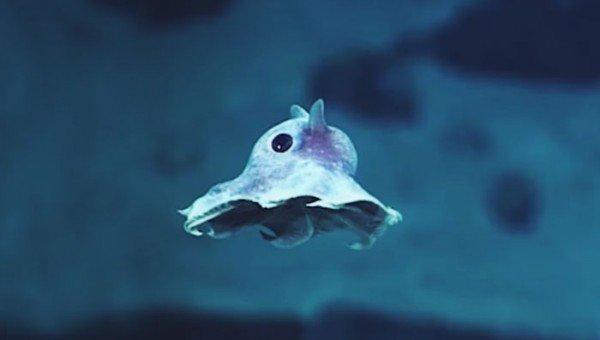 مخلوقات غريبة في أعماق المحيط